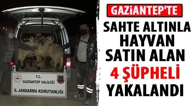 Gaziantep'te sahte altınla hayvan satın alan 4 şüpheli yakalandı