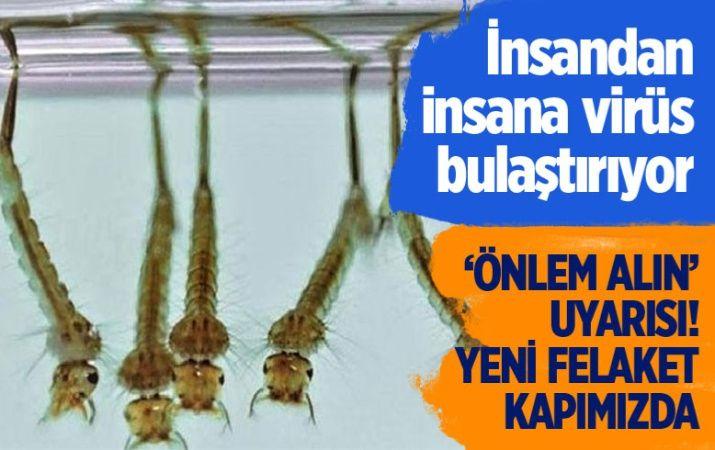 Prof. Dr. Ali Satar'dan 'sivrisinek' uyarısı!