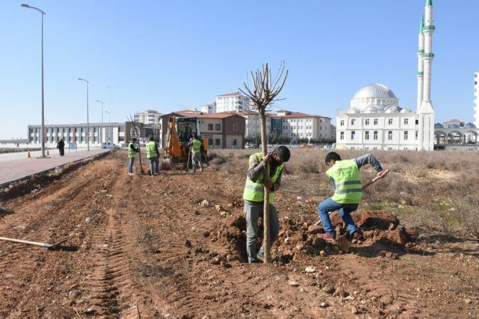 Şahinbey Belediyesi 4.215.000 Ağaç Dikti