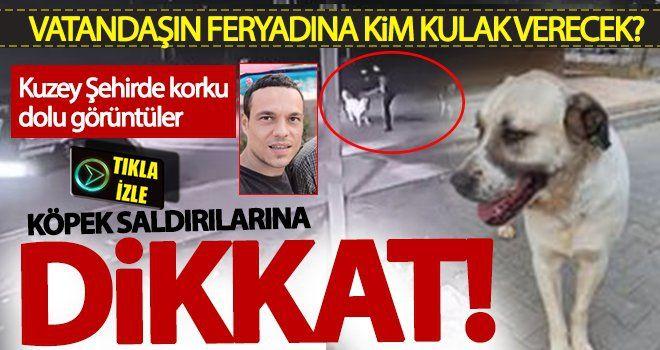 Dikkat! Gaziantep'te başı boş sokak köpekleri tehlikeler saçıyor! Lütfen çare bulun!