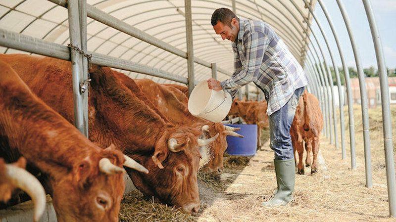 Hayvancılıkla uğraşanlara Vali Gül müjdesi