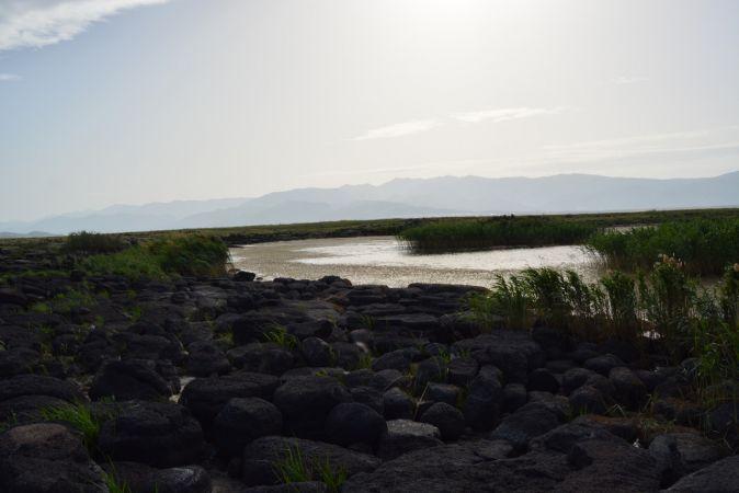 Gaziantep'teki volkanik Kurt Gölü'nde papatya şöleni