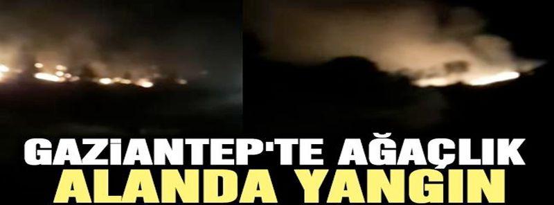 Gaziantep'te ağaçlık alanda yangın