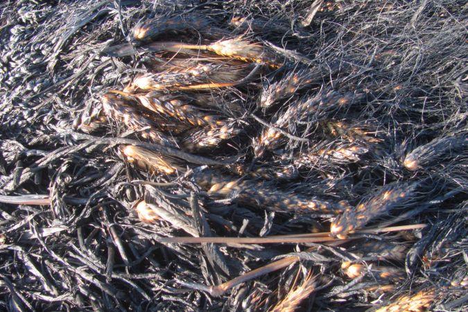 Gaziantep'te buğday ekili tarlada yangın çıktı
