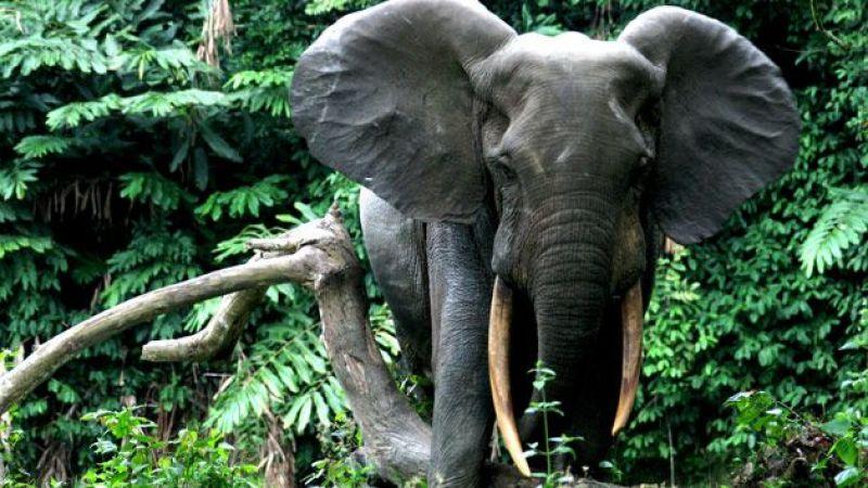 Hindistan'da 28 filin korona virüs testi pozitif çıktı