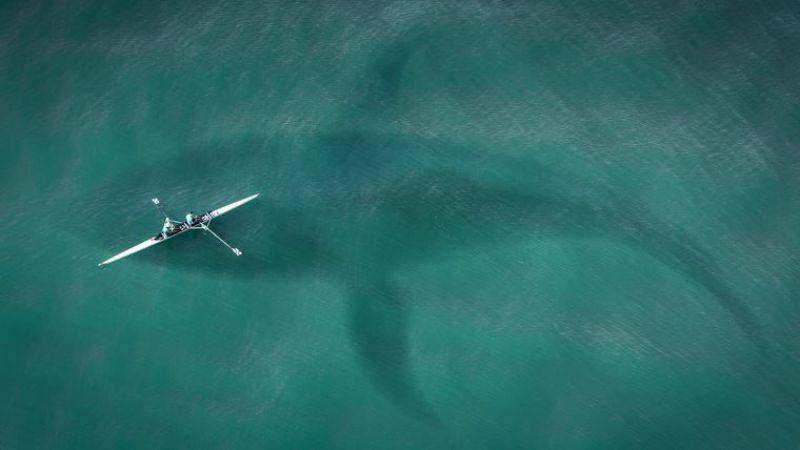 Bilim insanları araştırdı: Köpekbalıklarının yüzde 90'ının gizemli bir şekilde yok olmuş
