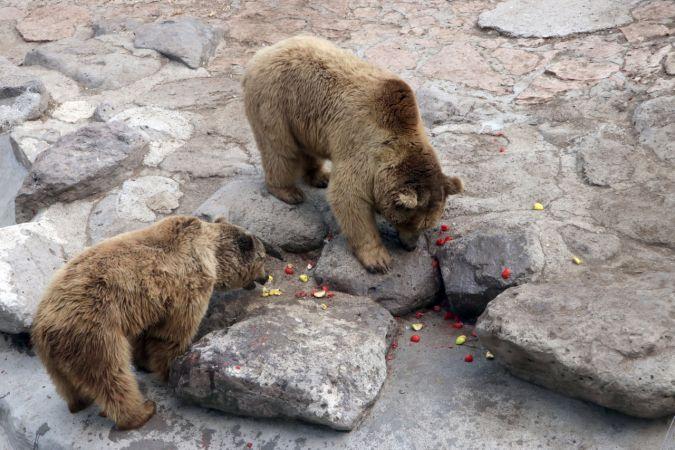 """Hayvanat Bahçesinin sakinleri, kavurucu sıcaklarda """"buzlu kokteyl""""lerle serinliyor"""