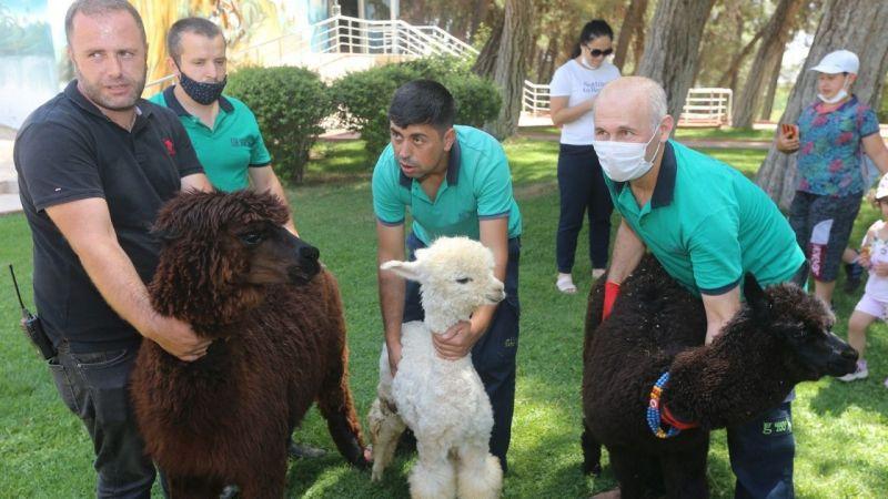 Gaziantep Hayvanat Bahçesi yeni misafirlerini ağırlamaya başladı