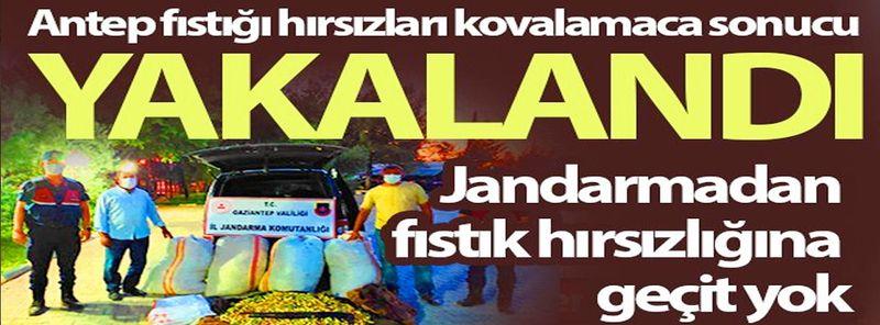 Son Dakika Haber: 390 Kilo Fıstık Çaldılar Yakayı Ele Verdiler!Jandarmadan fıstık hırsızlığına geçit yok