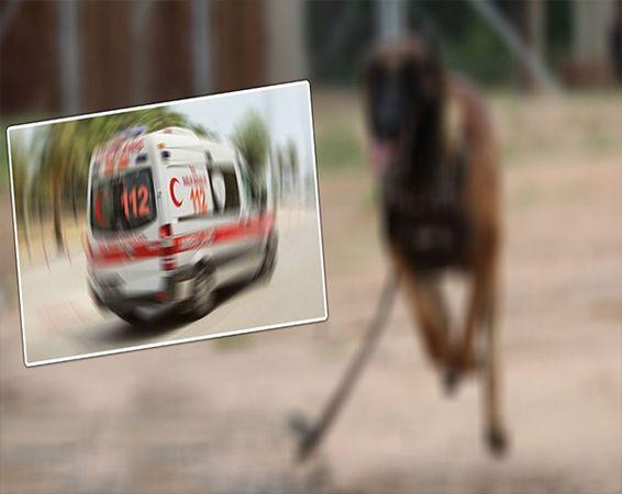 Gaziantep'te kazazede köpek, kendisine yardım etmek isteyen çocuğu yaraladı