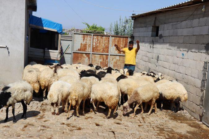 Kilis'te 30 koyun çaldığı iddia edilen şüpheli gözaltına alındı