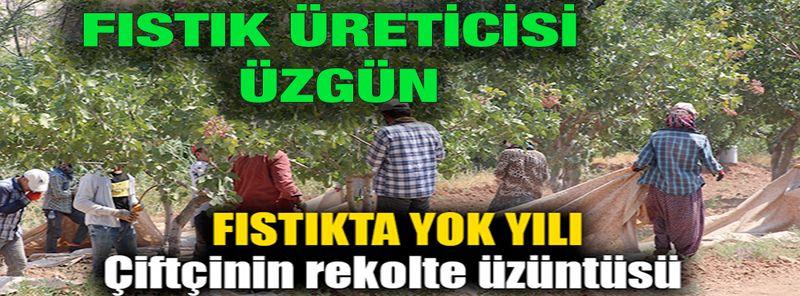 Son Dakika: Gaziantep Fıstığında Yok Yılı! Fıstık Üreticisi Üzgün.