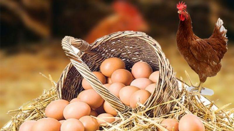 81 ilde tavuklar değil, yumurta fiyatları uçuyor!