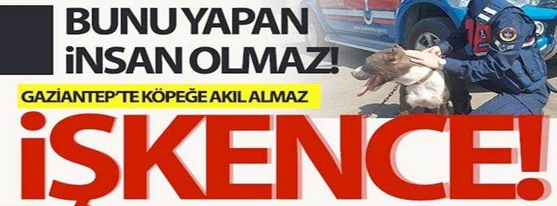 Son Dakika...Gaziantep'te zincirle otomobilin arkasına bağlanan köpeği jandarma kurtardı