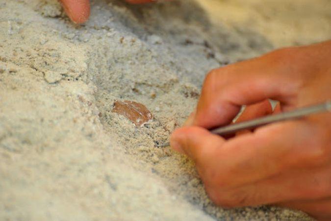 Çobanın keşfettiği mağarada M.Ö. 10 bin yılından kalma 'yiyecek' bulundu