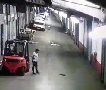 Sokak kedisini tekmeleyerek öldürdü, can çekişmesini de film izler gibi izledi