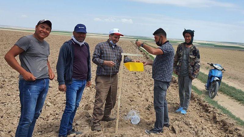 Karapınar'da tarlalarda zararlılara karşı biyoteknik mücadele sürüyor