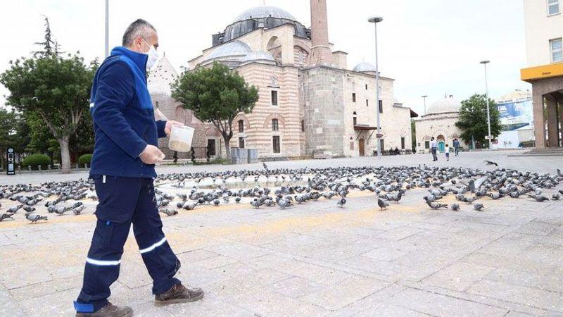"""Konya Büyükşehir Belediyesi, """"tam kapanma"""" sürecinde sokak hayvanlarını unutmadı"""