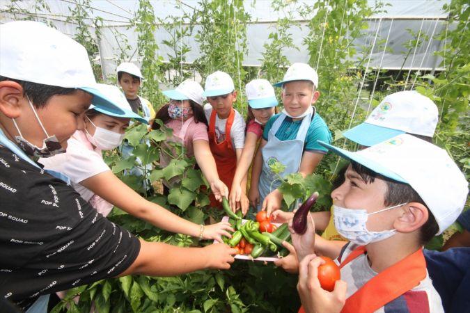 Minik eller, okul bahçesindeki serada ata tohumlarıyla tarım ürünleri yetiştiriyor