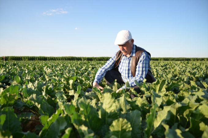 Konyalı çiftçi ıslah ettiği tarlalarıyla pancar üreticisine rol model oluyor