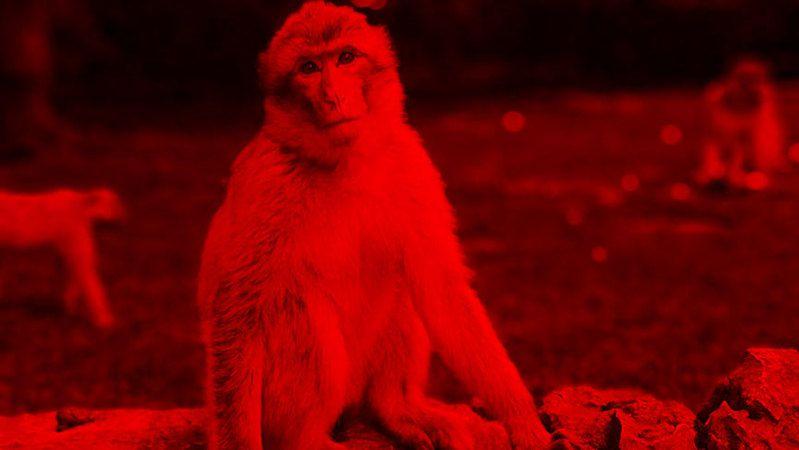 Çin'de ortaya çıkan yeni bir virüs kâbusu daha! 'Monkey B' sebepli ilk can kaybı yaşandı.