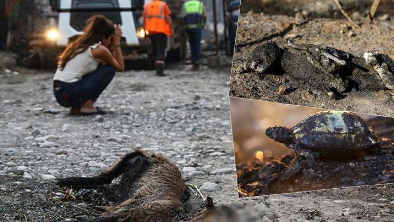 Manavgat'ta facia! Yangının boyutu gün ağarınca ortaya çıktı