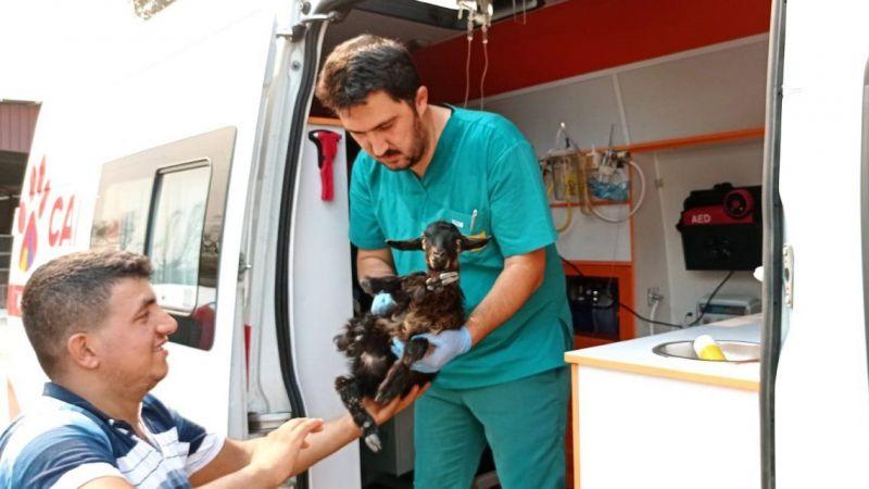 Manavgat'taki yangında yaralanan hayvanların yardımına Konya'nın 'Canbulan'ı koştu