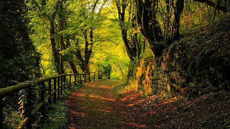 Konya ve Aksaray'da orman alanlarına girişler yasaklandı