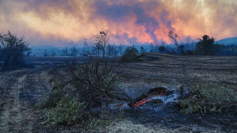 Yanan ormanlar için uzmanlardan ve yetkililerden umut veren açıklama