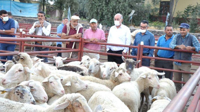 Emirgazi Belediye Başkanı 50 adet koyun gönderdi