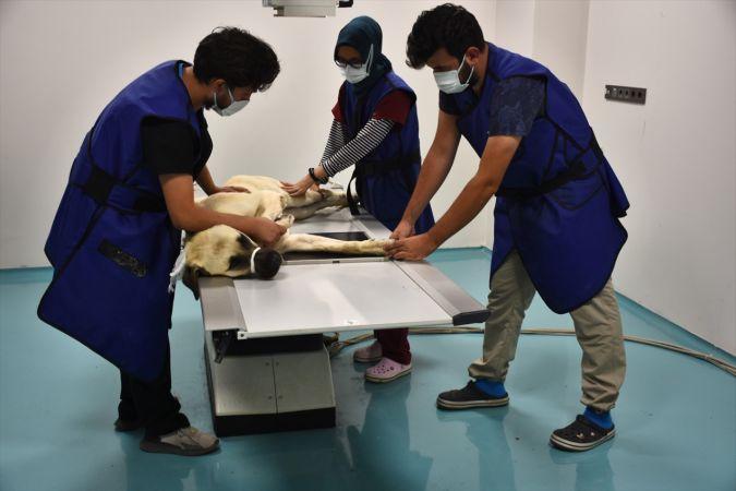 Konya'daki hayvan hastanesi sevimli dostlara şifa oluyor