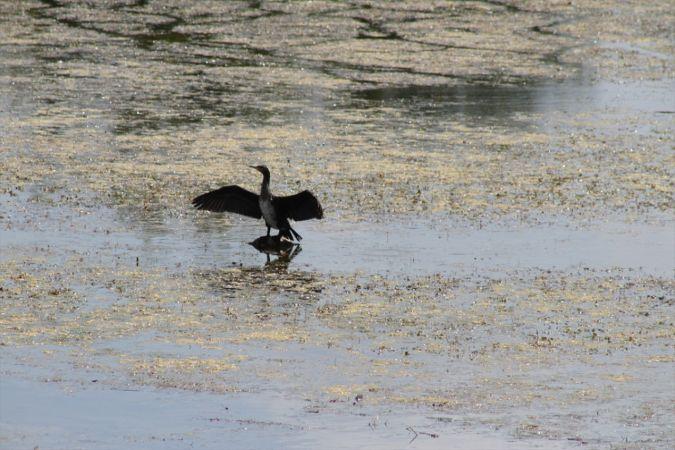 Kuraklığın etkilediği Beyşehir Gölü eski günlerini arıyor