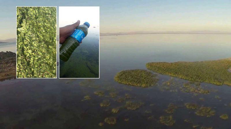 Konya Beyşehir Gölü'nde alg patlaması yaşanıyor! Suyun rengi yeşile döndü