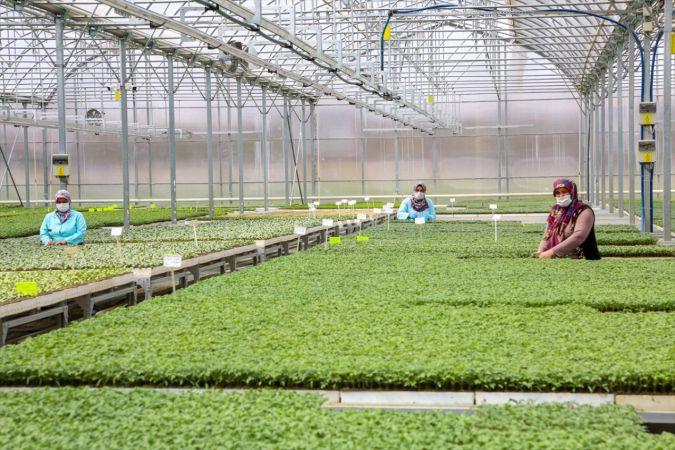 Meram'da yerli ve milli tohumlar lezzetli ürünlere dönüşüyor