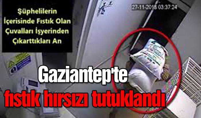 Gaziantep'te fıstık hırsızı tutuklandı