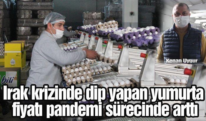 Irak krizinde dip yapan yumurta fiyatı pandemi sürecinde arttı