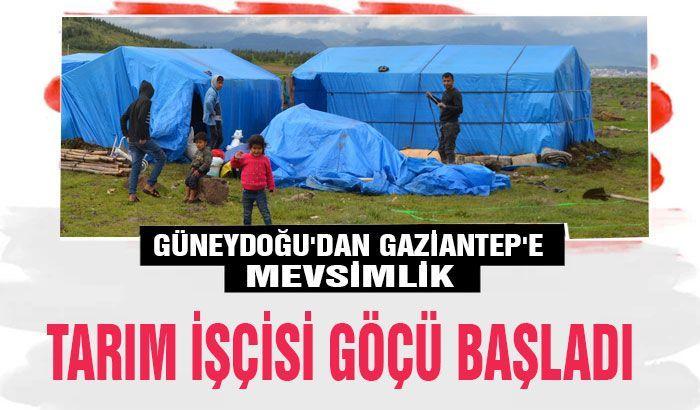 Güneydoğu'dan Gaziantep'e mevsimlik tarım işçisi göçü başladı