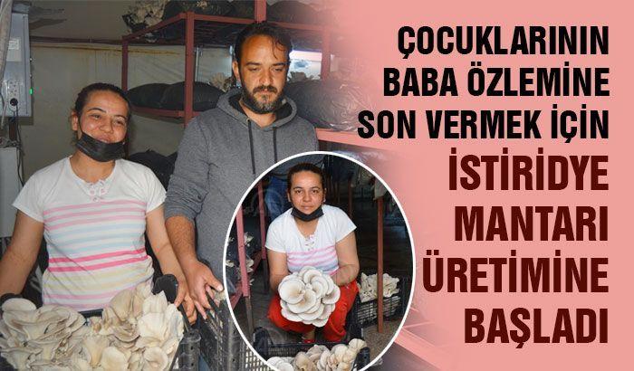 Gaziantepli çift, çocuklarının baba özlemine son vermek için istiridye mantarı üretimine başladı