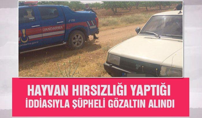 Gaziantep'te hayvan hırsızlığı yaptığı iddiasıyla şüpheli gözaltın alındı