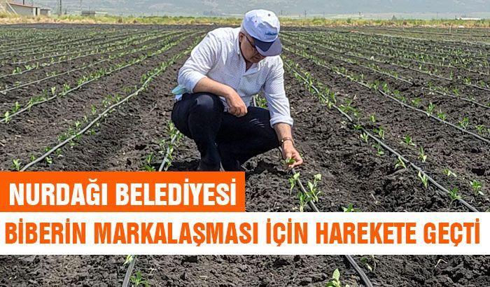 Nurdağı Belediyesi biberin markalaşması için harekete geçti