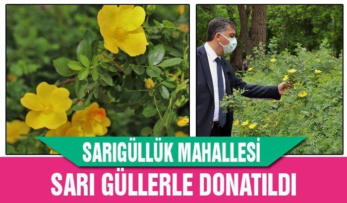 Sarıgüllük Mahallesi, sarı güllerle donatıldı