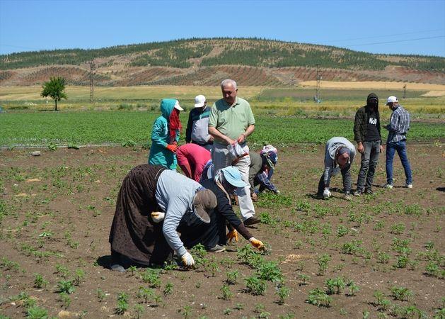 İslahiye Ziraat Odası Başkanı Köse, mevsimlik tarım işçilerini ziyaret etti