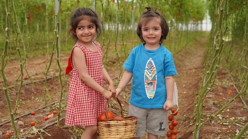 Minik eller domates, biber ve patlıcan topladı