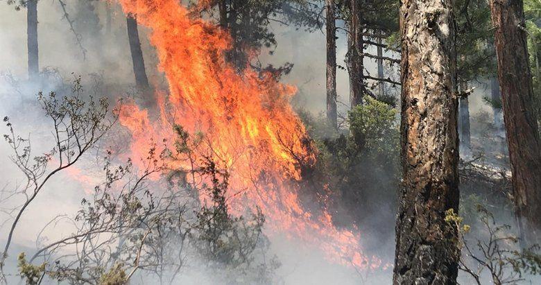 Uşak'ta Çıkan Orman Yangını Korkuttu! Yangına Müdahale Edildi
