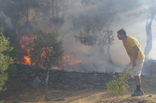 Bodrum Halkı Orman Yangınını Söndürmek İçin Bir Oldu!