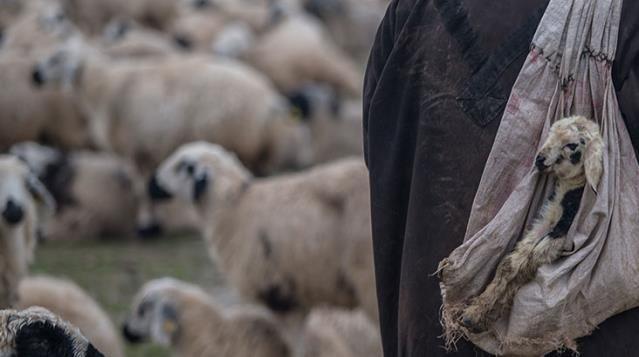 Van'da Yıldırım'a Tutulan Çoban Hayatını Kaybetti