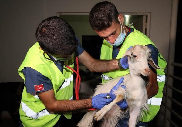 Gönüllü Veterinerler Yangın Bölgelerine Akın Etti!