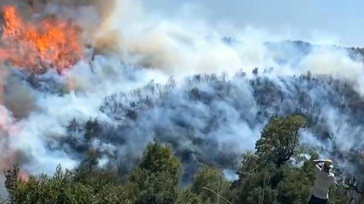 Aydın'da Orman Yangını! Bozdoğan İlçesine Acil Müdahale Edildi