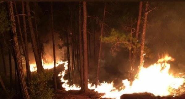 Aydın Vali Yardımcısı Arat, Yangının Kontrol Altına Alındığını Söyledi