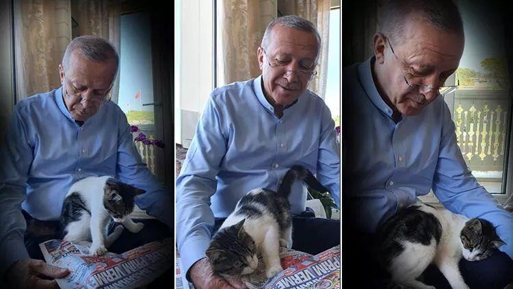 Erdoğan torununun kedisiyle fotoğrafını paylaştı